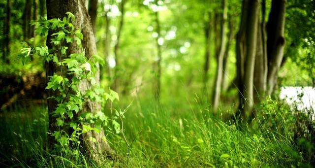 约会春天  拥抱绿色